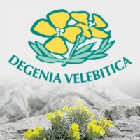 VIDEO o Standardu Degenia Velebitica